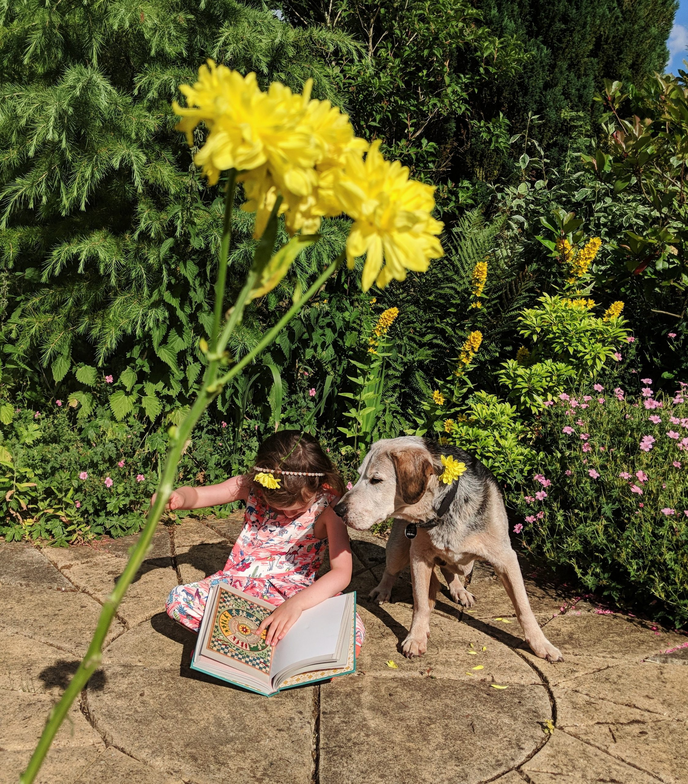 Buddy reading on Instagram - A little girl reading with her dog