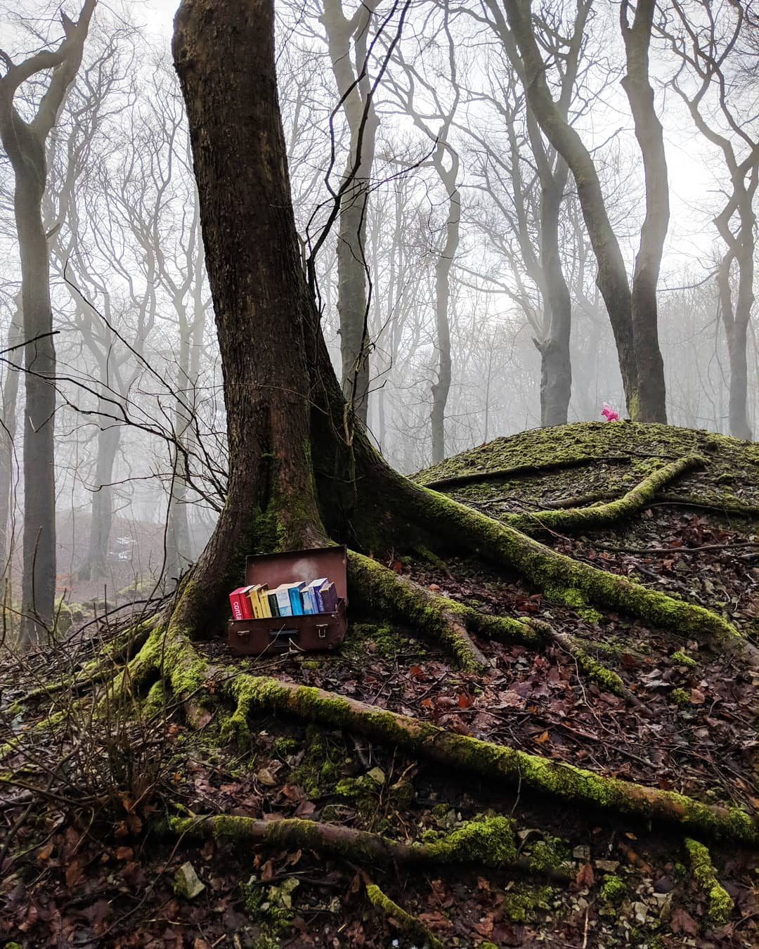 A suitcase of rainbow books by a tree