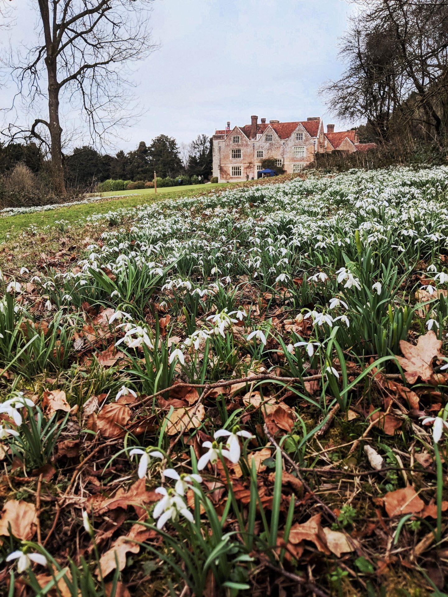 Chawton House Snowdrops